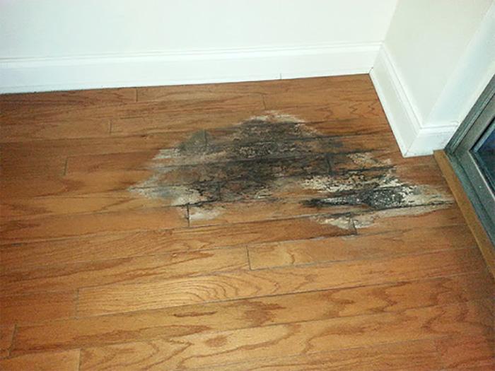 Hướng dẫn bảo quản và vệ sinh đồ nội thất bằng gỗ khỏi nấm mốc-6